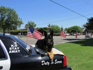 k9 duty to serve